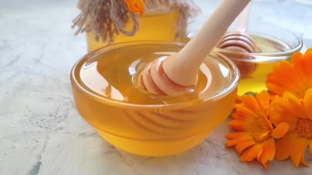 čerstvá medová Calendula květina, pomalý pohyb