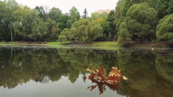 Podzimní listí v jezírku a kachny 2
