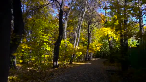 Autumn leaves falling in slow motion. Colorful fall season.