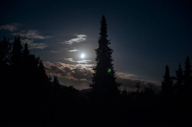 Moon with green lens flare and starry sky on July 30th, 2020 over Bavaria / Germany, taken with a 70mm lens at f / 3.2. Fir tree in the foreground.