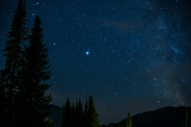 Starry sky over Bavaria / Germany on July 20th, 2020 taken with a 50mm lens at f / 1.4. Fir trees in the foreground.