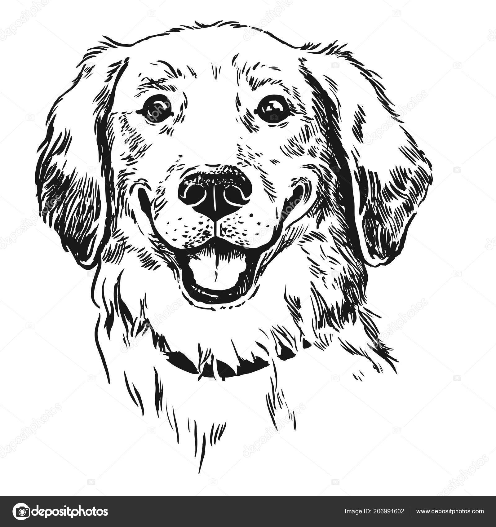 Perro Golden Retriever Sonriendo Con Lengua Fuera Pluma Tinta Estilo