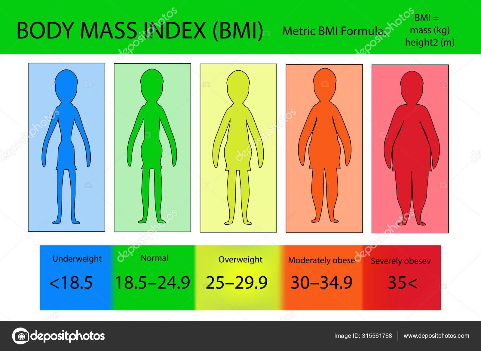 Body Mass Index Vektor von untergewichtig bis extrem fettleibig.  Frauensilhouetten mit unterschiedlichen Fettleibigkeitsgraden. 20