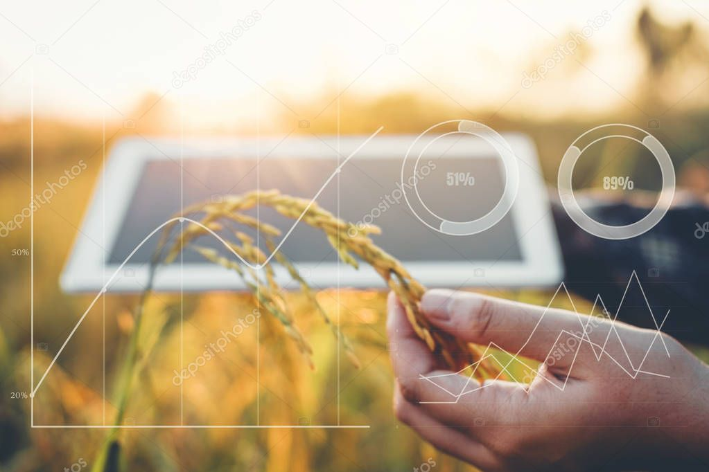 Smart farming Agricultural technology and organic agriculture Woman using the research tablet and studying the development of rice varieties in rice field