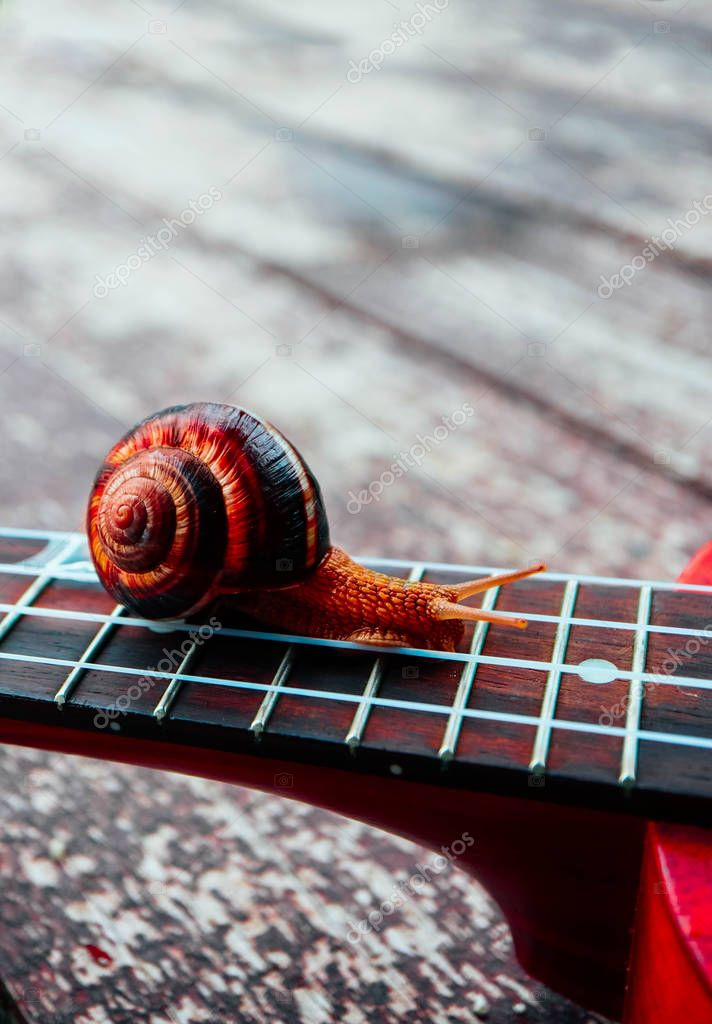 A beautiful big snail on the guitar, macro view. Outdoor musical concept. Strings close up.