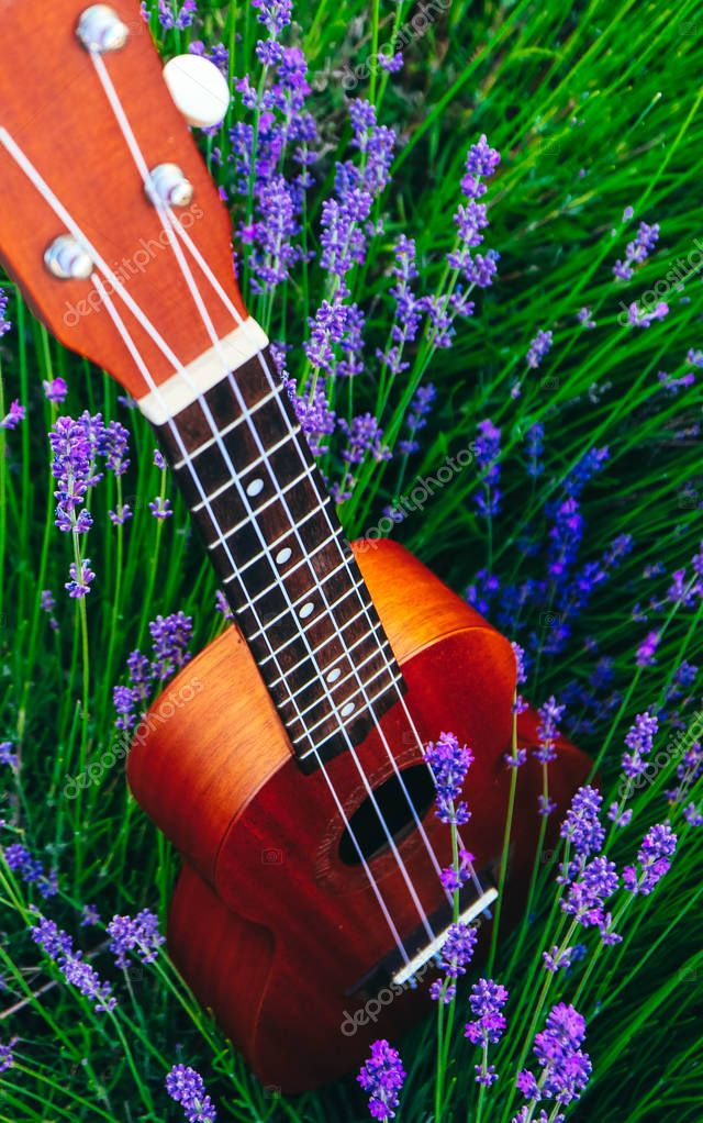 An ukulele guitar on the lavender field, close up. Music and nature concept.