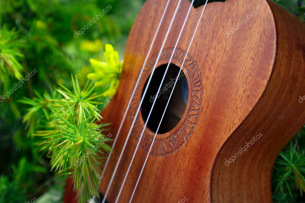 Ukulele guitar at the mountain nature pine forest landscape. Photo depicts musical instrument Ukulele small guitar in outdoor natural green background. Strings close up. Macro view.