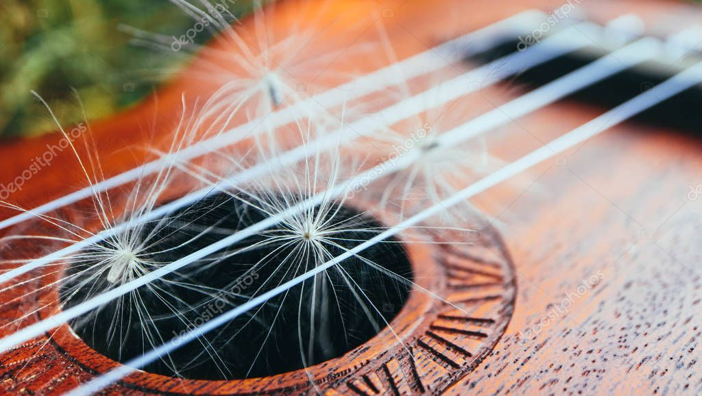 Romantic guitar strings close up, summertime, park. Playing guitar outdoor concept.