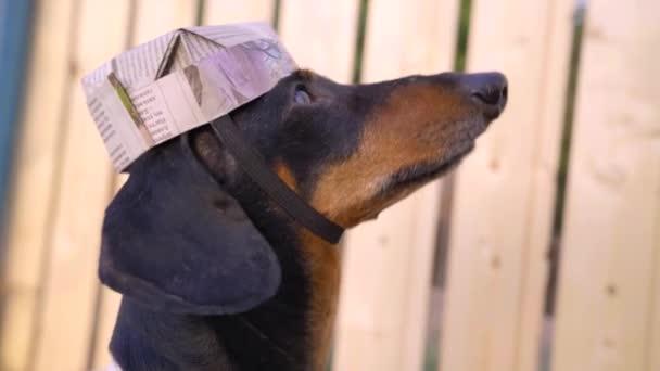 Közelkép profil portré aranyos fekete és barna tacskó visel vicces festő kalap készült régi újságok. A kutya szemmel tart valamit. Humorjavítási koncepció