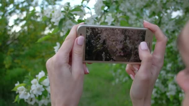 Female takes photos of blooming Apple trees, using smartphone in beautiful spring garden.