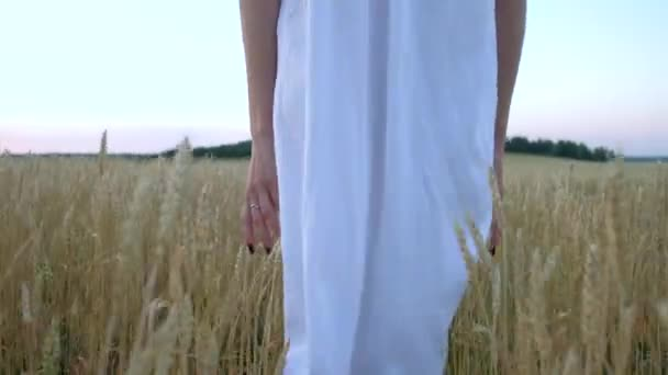 beautiful woman goes to field of ripe golden wheat