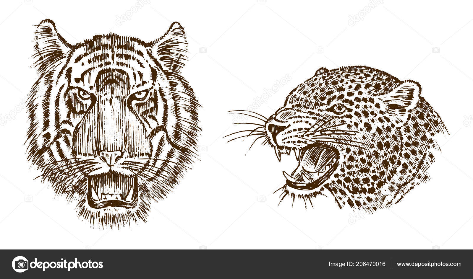 Japanese Wild Tiger And Animal Leopard Asian Cat Profile Of Head Or Face Tattoo Artwork Engraved Hand Drawn In Old Vintage Sketch Vector Surreal