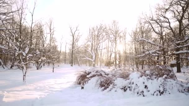 Winter sonnige schneebedeckte Landschaft. Schneeverwehungen im Wald. Neujahrszeit. Nördliches kaltes Wetter. Schöner Hintergrund für Schriftzüge oder Text.