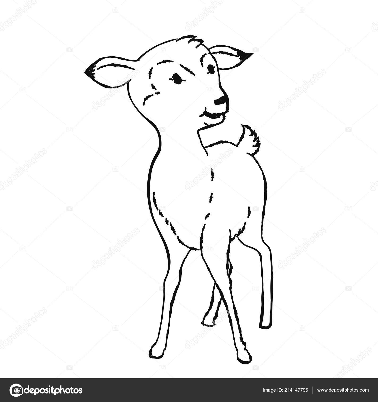Coloriage Bebe Cerf.Illustration Cerfs Animaux Bebe Mignon Coloriage Faon Hand Drawn