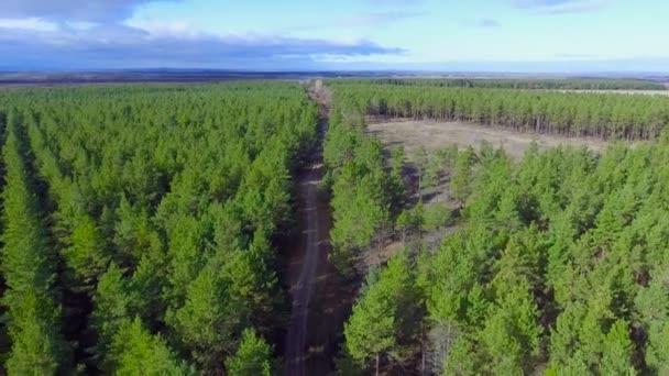 Cesta přes jehličnatý les