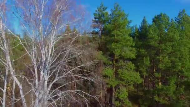 Řádky z břízy borovém lese