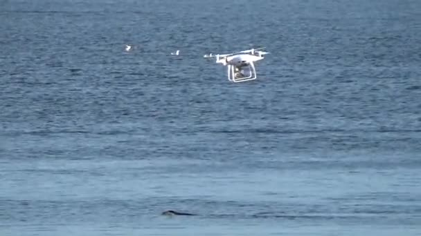 Quadcopter over sea lions