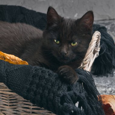 black cat in wicker basket and waves coat on gray cement background
