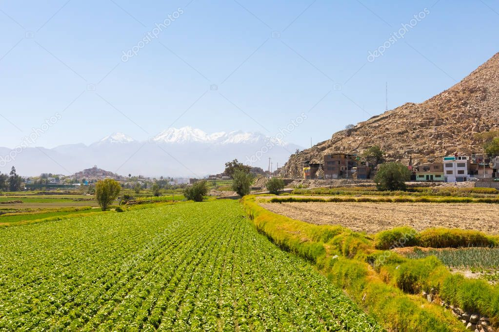 Peru September 2018  In the periptery of Arequipa the fields are cultivated despite the fact that the land is very arid.
