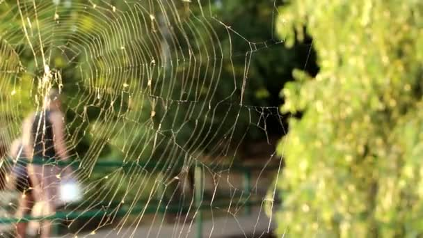 The spider made a web and it sways in the wind, in the background we see people passing by.