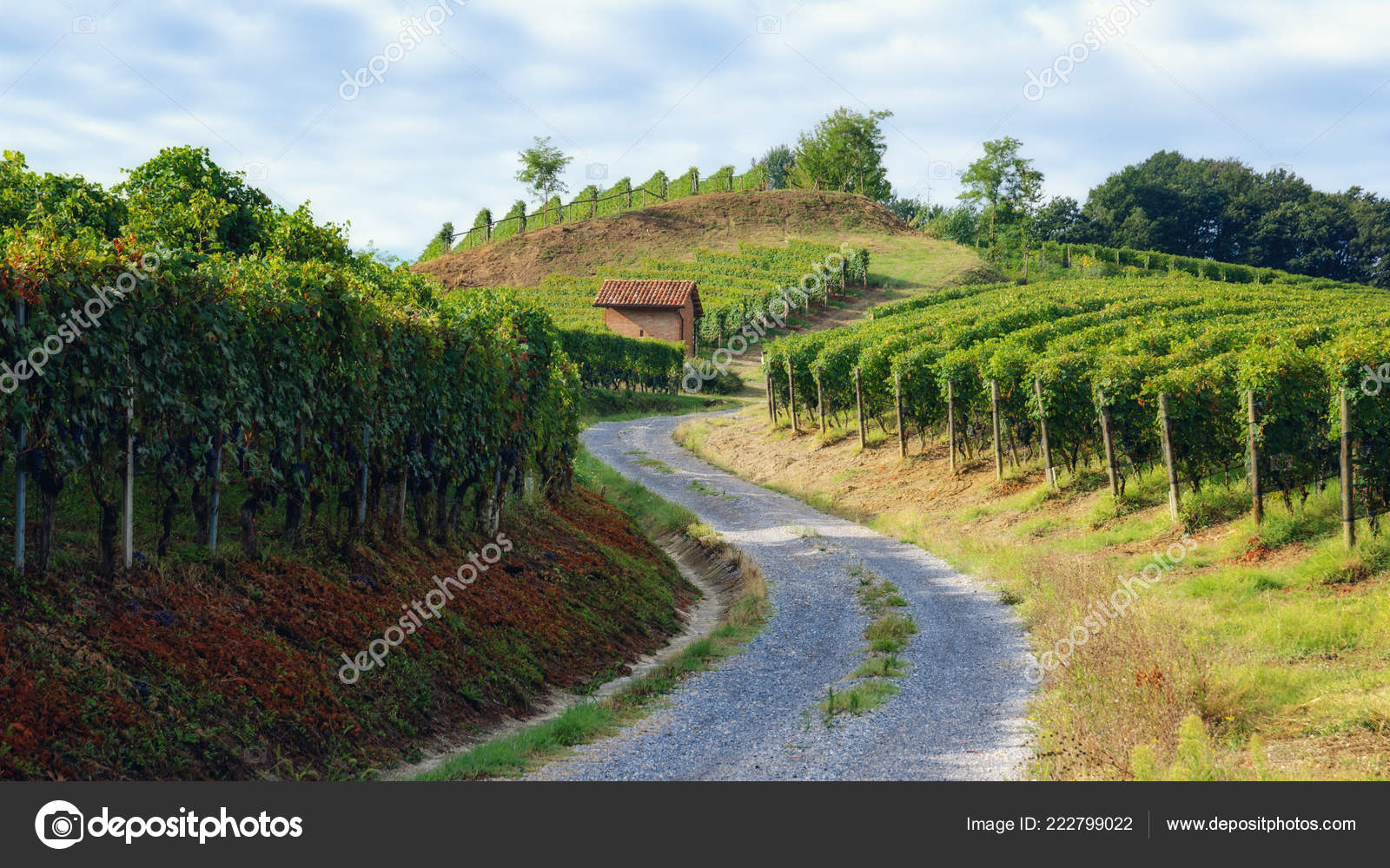 Vineyard Barolo Wine District Langhe Piedmont Italy Old Toolshed