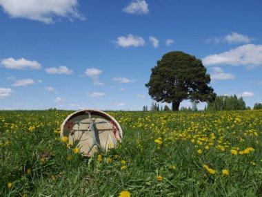 Shamanic tambourine on a meadow