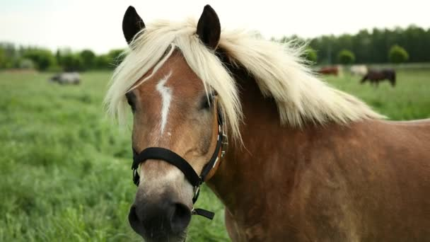 Portré egy gyönyörű jól ápolt, barna ló, a kantár