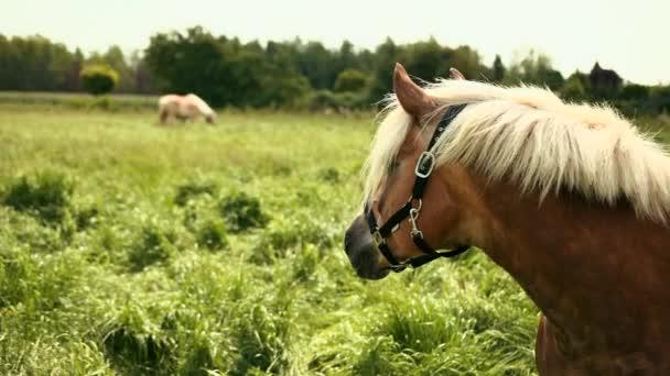 Portré gyönyörű, jól ápolt, elit barna ló, fehér sörényét