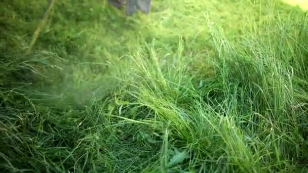 gardener mows high grass gasoline lawn mower, plants fly different directions