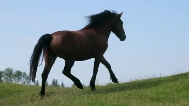 very beautiful, graceful brown horse, running, jumping on the field, green grass