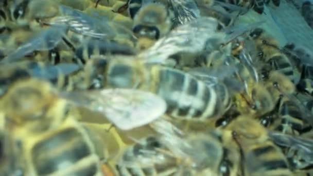 Obsazené včely uvnitř úlu s otevřenými a utěsněné kyvetami pro sladký med