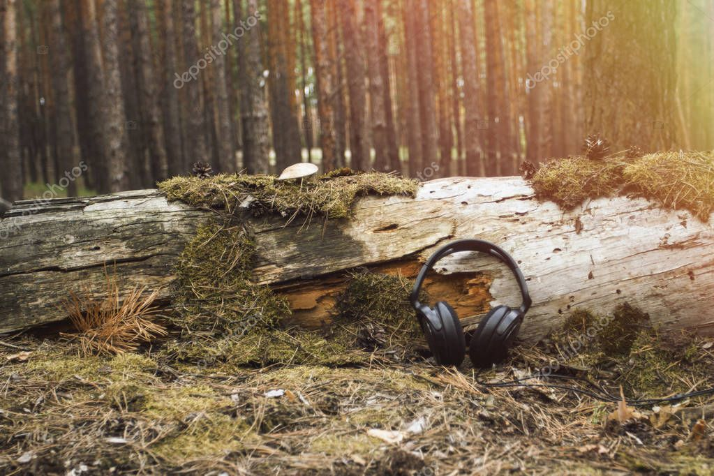 Headphones lie near a fallen tree overgrown with moss and mushrooms in a wild forest at dawn. Concept of the tranquility and sounds of nature, relaxation.