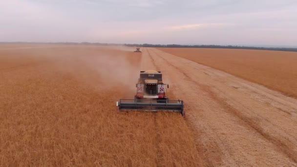 A combine szója mező betakarítás