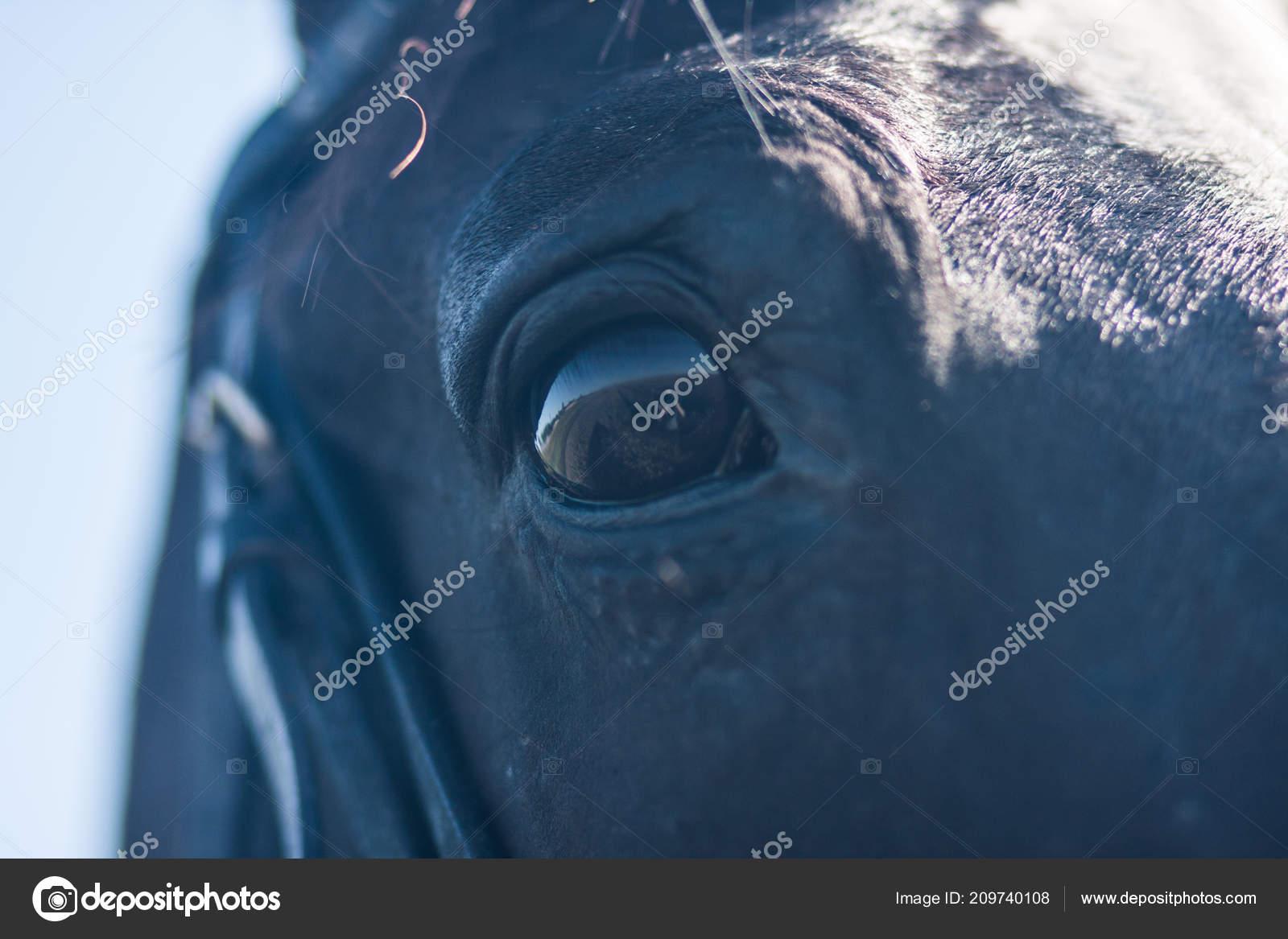 Horse Eye Black Horse Portrait Black Eye Horse Reflection