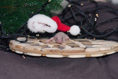 Christmas animals. Mouse baby near the tree.