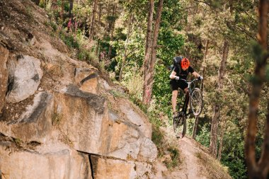 trial biker riding downhill outdoors in pine forest