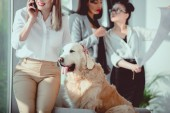 Photo businesswoman talking on smartphone while petting dog during work at office