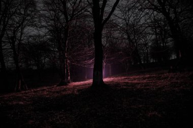 strange light in a dark forest at night. Silhouette of person standing in the dark forest with light. Dark night in forest at fog time. Surreal night forest scene. Horror halloween concept. Fairytale