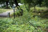 albero con muschio sulle radici in una foresta verde o muschio sul tronco dalbero. Corteccia di albero con muschio verde. Natura di Azerbaijan. Messa a fuoco selettiva