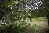Baum mit Moos auf Wurzeln in einem grünen Wald oder Moos auf Baumstamm. Baumrinde mit grünem Moos. Aserbaidschan-Natur. Selektiven Fokus