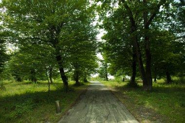 """Картина, постер, плакат, фотообои """"закат или восход солнца в лесном пейзаже. солнечный свет с естественным солнечным светом и солнечными лучами сквозь леса в летнем лесу. живописный вид. природа азербайджана постеры цветы фотографии природа"""", артикул 211526558"""