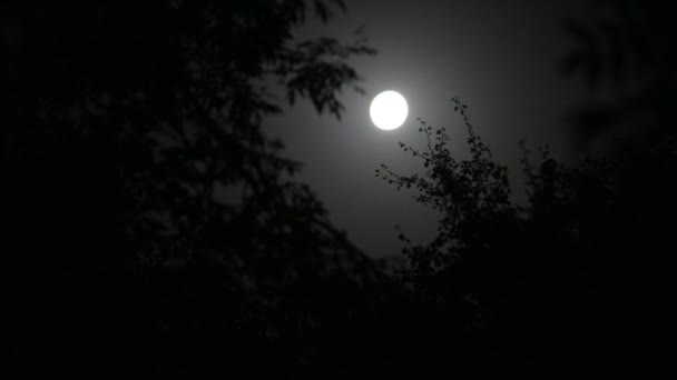 Night landscape of sky and super moon with bright moonlight behind silhouette of tree branch. Serenity nature background. Outdoors at nighttime. Selective focus
