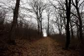 Krajina s krásnou mlha v lese na kopci nebo stezka lesem tajemný zimní s podzimní listí na zemi. Cesta lesem zimní. Magická atmosféra. Ázerbájdžán příroda