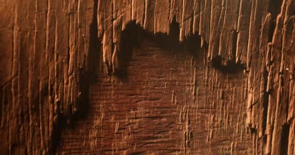 dunkle Holzstruktur. Nahaufnahme der alten Grunge dunklen Holzoberfläche. Selektiver Fokus