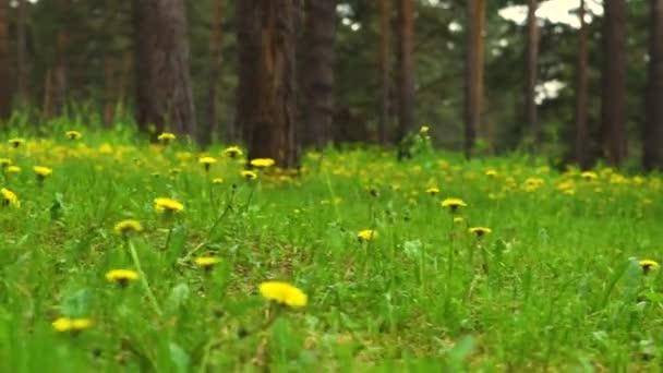 fű, a country Park