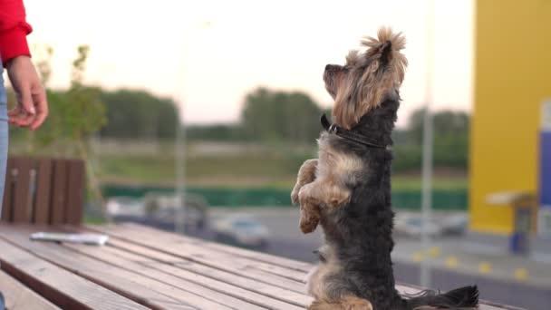 képzés egy kutya lábaira