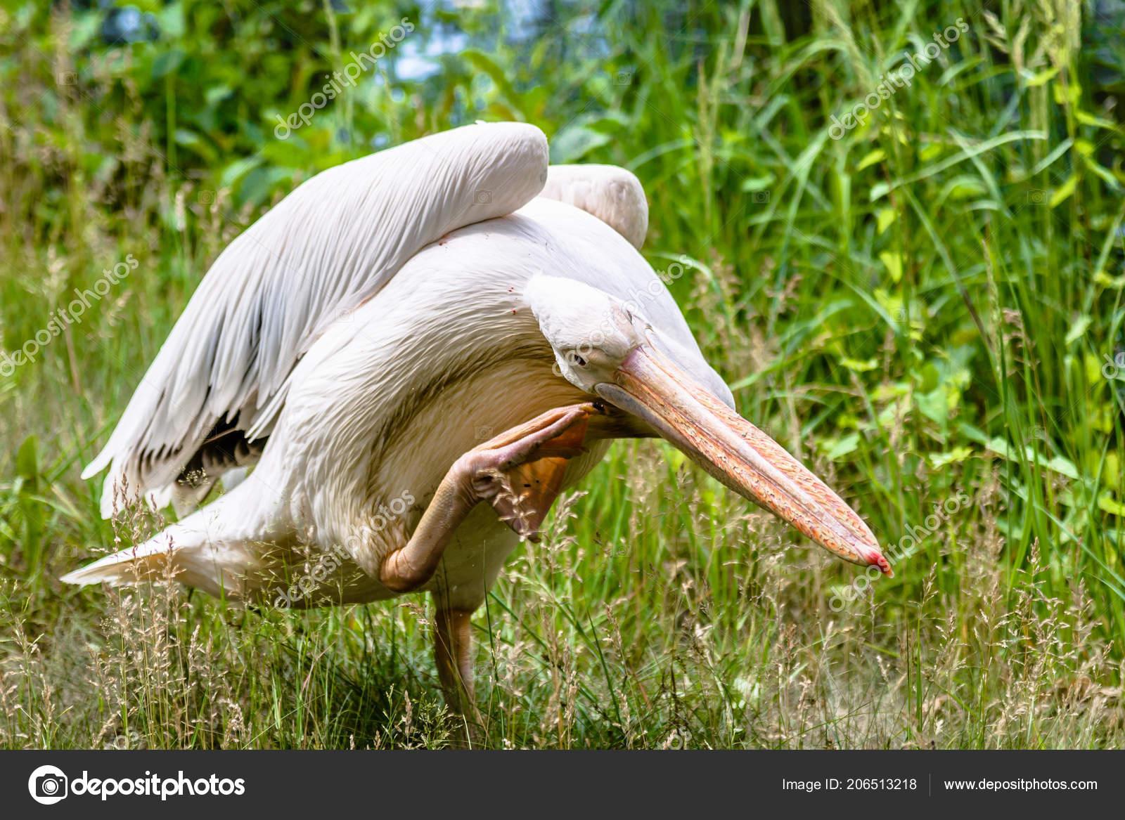 μεγάλο μεγάλο πουλί φωτογραφίαοικογένεια τύπος σεξ καρτούν