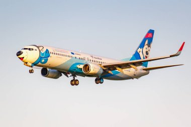 Moscow, Russia - June 20, 2019: Aircraft Boeing 737-8AS(WL) VQ-BQT Laika special livery of NordStar Airlines landing at Domodedovo international airport on a blue sky background at sunny evening