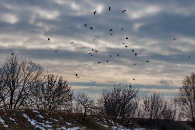 """Картина, постер, плакат, фотообои """"стая черных ворон летит против неба с яркими облаками в зимний день """", артикул 315508224"""