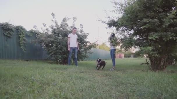 Anglický stafordšírský bulteriér běh a skok